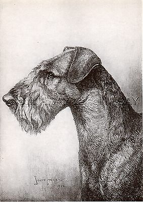 DOG Airedale Terrier Champion, ID'd, Pretty Print 1930s