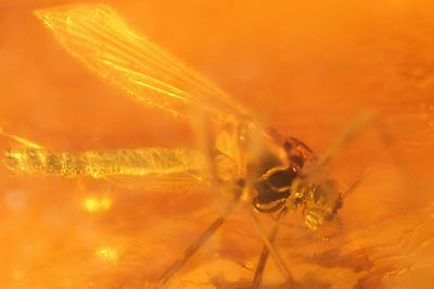 Fossil Insect Inclusion in Natural Polished Baltic Amber Stone +FREE PHOTO i400