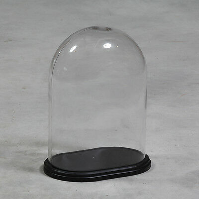 Oval Glass Display Bell Jar Dome Cloche on Black Wooden Base 42 x 32 x 21 cm