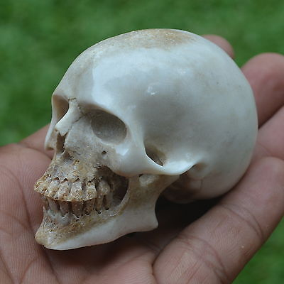 Skull Carving 47mm Height S350 in Antler Hand Carved