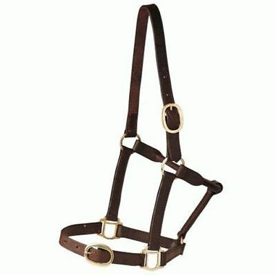 Leather Halter Single Ply PONY