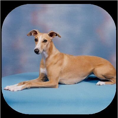 WHIPPET FAWN Rubber Backed Coasters #1012