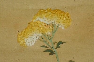 Hanging Scroll Japanese Painting Violet Japan Dandelion Antique Picture Old a786