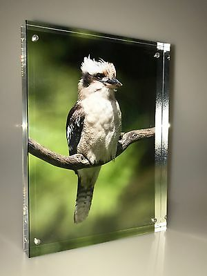 Kookaburra, Original Photo in Acrylic Block