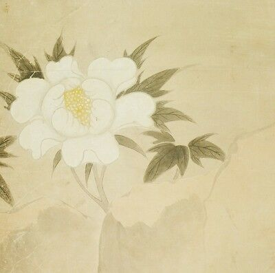 """Hanging Scroll 73"""" Japanese Painting Peony 光琳 尾形 Japan Antique Picture Old b554"""