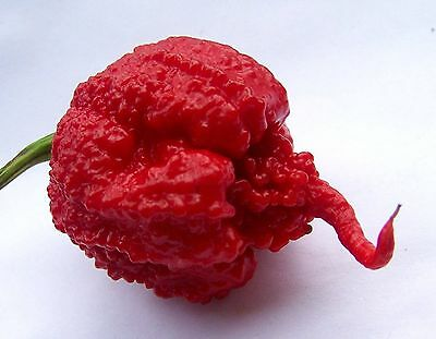 Vegetable Hot Pepper Carolina Reaper Red Genuine Hp22B 100 Seeds Worlds Hottest