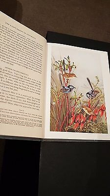 The Fairy Wrens Of Australia Book By Angus & Robertson Neville Cayley