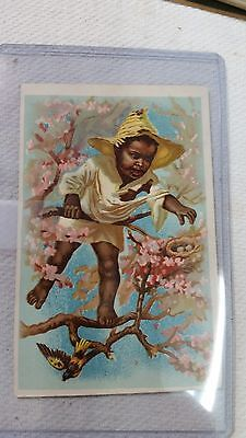 Black Americana Boy in Tree TRADE CARD Farrand Organs Bangor PA PERFECT Vibrant