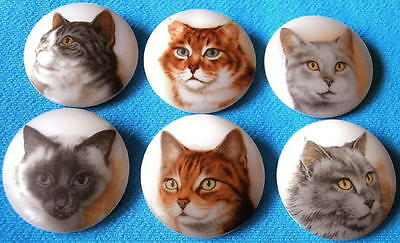 Collection of 6 Czech Glass Decal Buttons #D732 - SWEET CATS