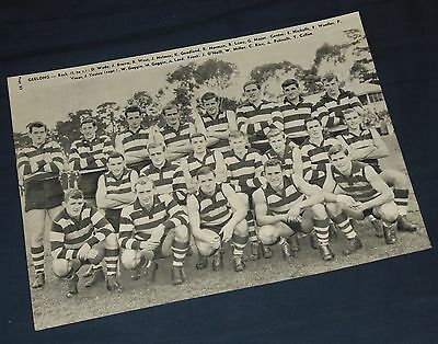 1961 Herald 'GEELONG CATS & SOUTH MELB SWANS' VFL Team-Photo page ***Original***