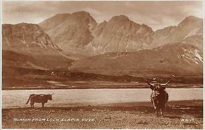 Isle of Skye, Blaven from Loch Slapin, Highland cattle, real photograph