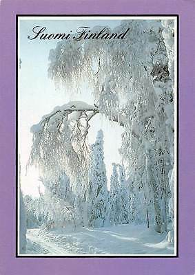 Suomi Finland Snowy Trees Forest