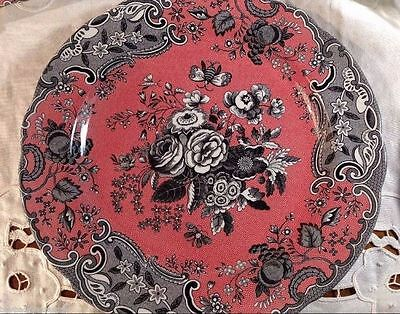 Spode Blue Rose THE ARCHIVED COLLECTION Dark Pink/Black Dinner Plate 10 5/8""