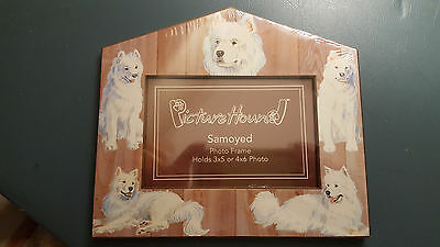 Samoyed Dog Picture Frame New Picture Hound Beautiful Dogs