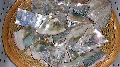 Abalone Shell Pieces - A Grade