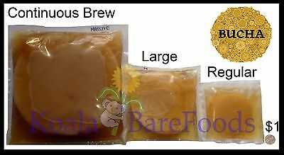 Massive Kombucha Scoby for Continuous Brewing + 1000mL Inoculant FREE Shipping