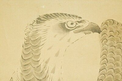 Hanging Scroll Japanese Painting Hawk Old Ink Art Japan Antique Picture b521