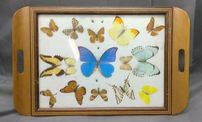 Vintage Old Brazil Brazillian Butterfly Art Butterflies Inlaid Wood Serving Tray