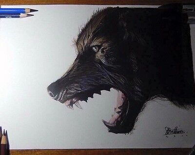 Wolf Original Signed Colour Drawing A4