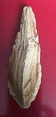 """Texas Petrified Wood Piece 5"""" By 2"""" By 1-1/3"""""""