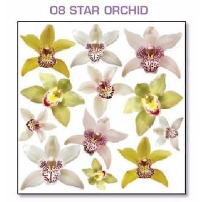 Series 4.08 Star Orchid