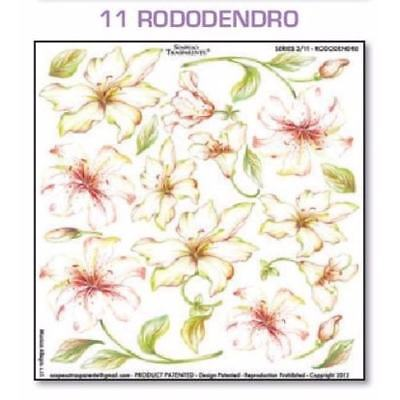 Series 3.11 Rododendro