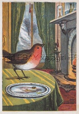 BIRD Robin Comes Inside House for a Meal, Antique 1870s Chromolith Print