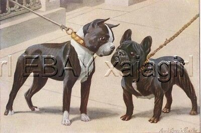 DOG BOSTON TERRIER & French Bulldog, 85+ Year Old Print