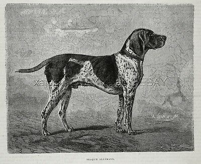 Dog German Shorthaired Pointer Hunting (Breed Named) 1880s Antique Print 2