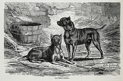 Dog Manchester Terrier Pair, Early View of Breed, 1870s Antique Engraving Print