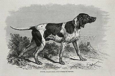 Dog Pointer Braque Du Puy NAMED, Breeder, Extinct 1870s Antique Engraving Print