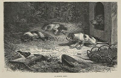 Dog Pointer Puppy's First Point, Bird in Kennel Steals Food, 1880s Antique Print