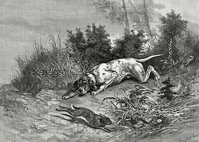 Dog Pointer Versus Rabbit in Hunting Scene, Large 1880s Antique Print