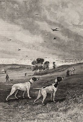Dog Pointers Pointing at the Start of the Hunt, Large 1880s Antique Print