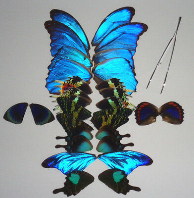 30 pcs real butterfly wing jewelry artwork