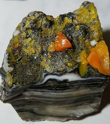 •WICKED• FOSSILIZED MULTICOLOR PINSTRIPE Akro Agate Marble Cullet RARE 10.6 OZ