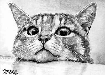 original aceo-animals-cats-drawing-THE OBSERVER-by O.Bracco