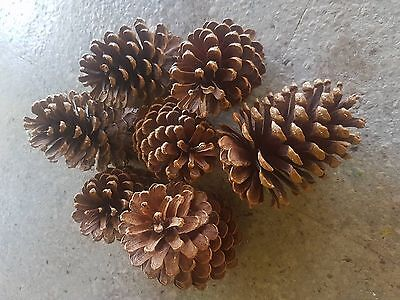 9 to 14 Large Real Pine cones Decorations wedding table Christmas upto 400 Grams
