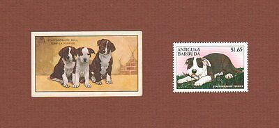 Staffordshire Bull Terrier dog postage stamp and card, set of 2