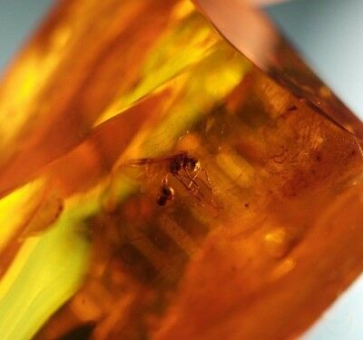12g Baltic sea polished raw Amber with Inclusion bugs in the display frame gift
