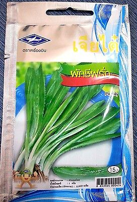 300 seeds Sunflower Sprout Thai Vegetable Plant Chia Tai