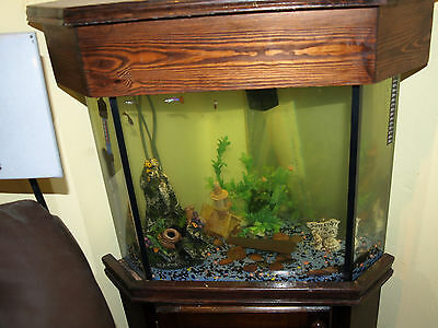 Corner fitting fish tank  with  stones collection only