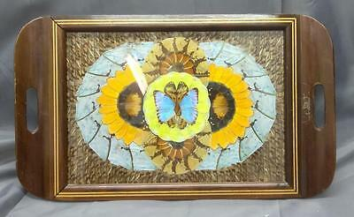 Old Vintage Brazil Brazillian Butterfly Butterflies Inlaid Wood Serving Tray