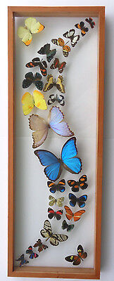 26 Real Butterflies Framed Mounted In Wood Framed Double Glass Amazing Rainbows