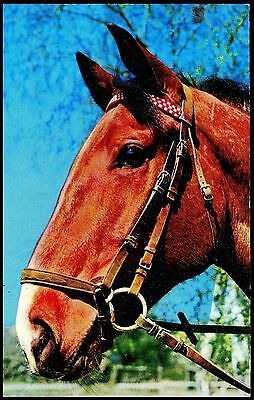 Pc. Showing A Lovely  Horse  900/8 Published Constance