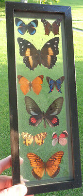 "9 Real Framed Butterflies Double Glass 4.5""x12.5""inches In A Black Frame Amazing"