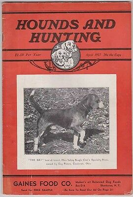 HOUNDS AND HUNTING Magazine April 1937, Beagles & Beagling H&H