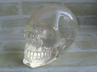 Translucent - Semi / Transparent - 2007 Summit Collection - Resin Skull