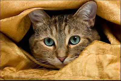 """Counted Cross Stitch Kit """"Hiding"""" by Andrea's Designs"""