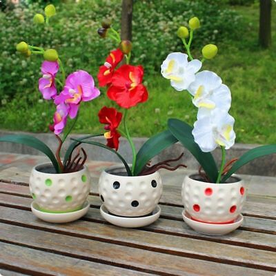 200 pcs/Bag Phalaenopsis Orchid Seeds Rare Flower Seeds Gardening Planting